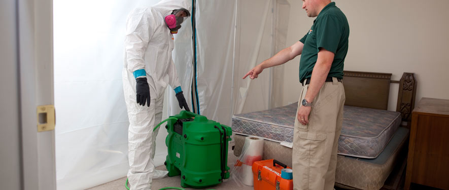 Palmdale, CA mold removal process